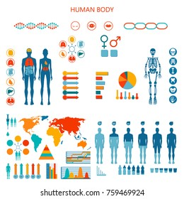 Human body infographic.  illustration of earthborn organs and skeleton, water balance, formulation of national medicines policies worldwide.