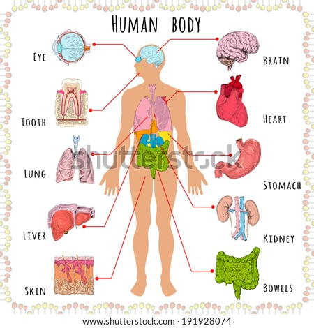 Human Body Medical Infographics Person Silhouette Stock Illustration