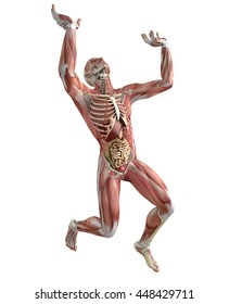 Human body, muscular system, weightlifting, lifting, anatomy. 3d rendering