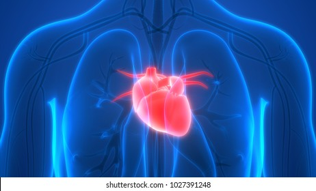 Cardiovascular System Images, Stock Photos & Vectors | Shutterstock