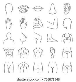 Human body parts linear icons set. Anatomy. Health care. Thin line contour symbols. Isolated raster outline illustrations