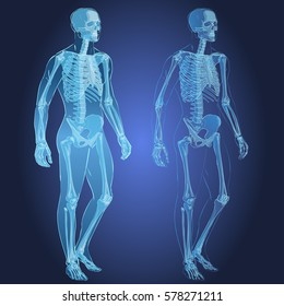 Human body parts skeletal man anatomy  illustration isolated