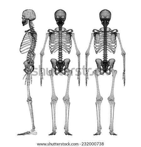 Human Body Skeleton Body Structure Wire Stock Illustration 232000738 ...