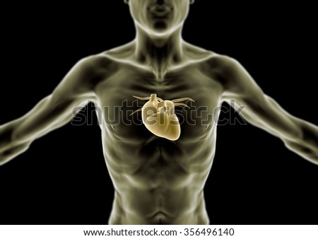 Human Body Skinny Person Anorexia Heart Stock Illustration 356496140
