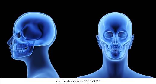 The Human Body - Skull. X-Ray Effect. 3D illustration