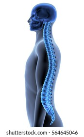 The Human Body - Spine. Side View. X-ray Effect. 3D illustration