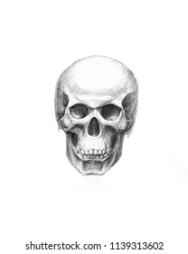 Human bones. Scull hand drawn illustration. Body anatomy, medical drawing.