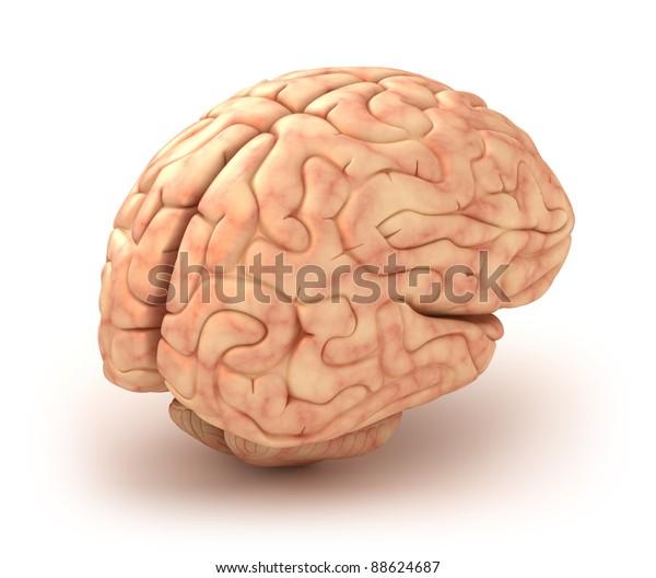 Human brain 3D model, isolated