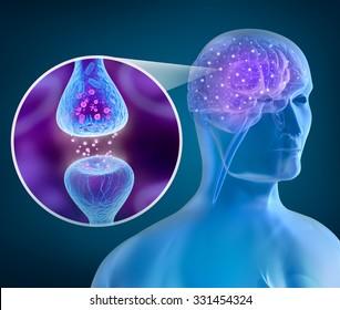 Human brain and Active receptor
