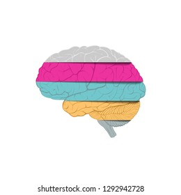Human brain consists of strips of multicolored paper. Isolated on white background. Illustration