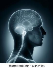 Human brain cross section medical x-ray scan