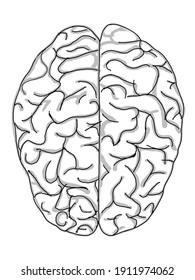 human brain drawing digital art.