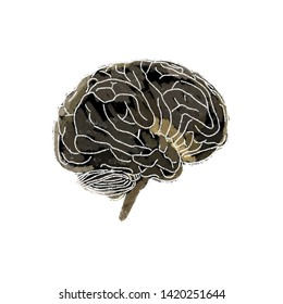 Human brain isolated sketch artwork concept. 3d illustration.