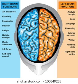 Human brain diagram images stock photos vectors shutterstock human brain left and right functions ccuart Choice Image