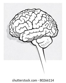 human brain medical schematic simplified illustration on white (raster version)