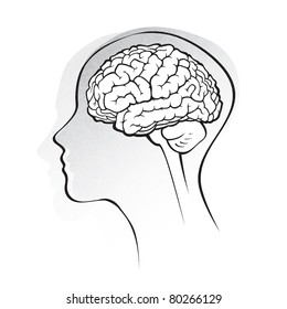 Human brain medical schematic simplified illustration stock human brain medical schematic simplified illustration on white raster version ccuart Images