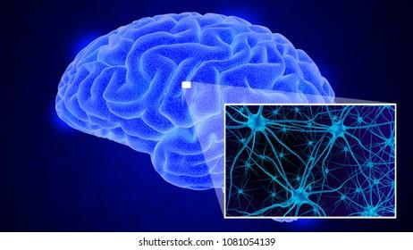 Human brain on dark background. 3D render
