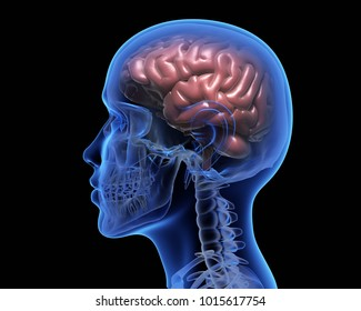 Human brain over black background. 3D illustration