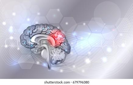Human brain problems light grey glowing background, beautiful bright illustration detailed anatomy
