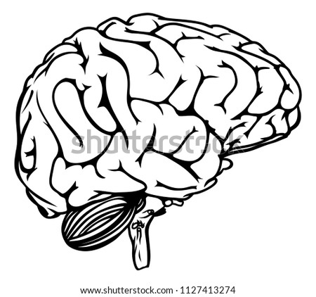 Human Brain Profile Anatomical Drawing Stock Illustration
