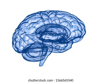 Human brain - side view blue 3d render isolated on white
