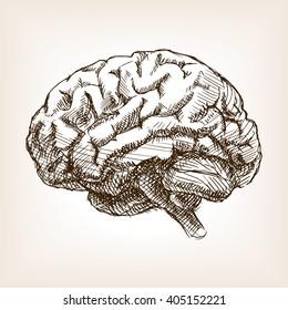 Human brain sketch style raster illustration. Old hand drawn engraving imitation. Brain illustration