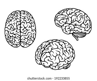 Human brain in three planes for medical logo design. Vector version also available in gallery