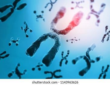 Human chromosomes. 3d render