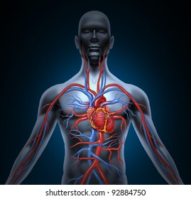 Human circulation cardiovascular system with heart anatomy from a healthy body on a black glowing background as a medical health care symbol of an inner vascular organ as a medical chart.