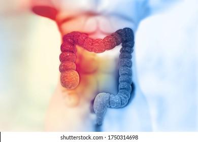 Human colon on scientific background. 3d illustration