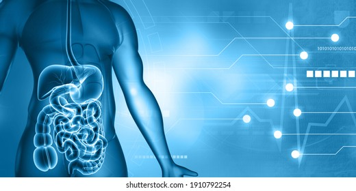 Human digestive system anatomy on scientific background. 3d illustration