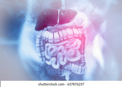 Human digestive system on scientific background. 3d illustration