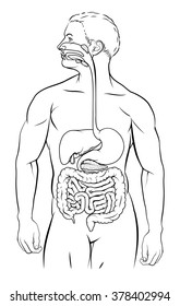 Human digestive system, digestive tract or alimentary canal black and white illustration