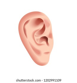 Human ear isolated on white photo-realistic illustration