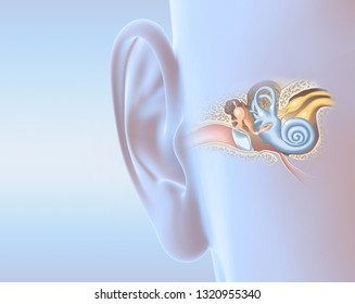 Human ear with middle ear, otitis, auditory canal, tympanic membrane, auditory canal and cochlea nerve, 3D illustration