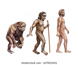 human evolution: monkey, Australopithecus and homo sapiens, realistic drawing, illustration for encyclopedia, isolated image on white background