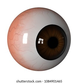 Human eyeball brown isolated on white background, Side view 3d render