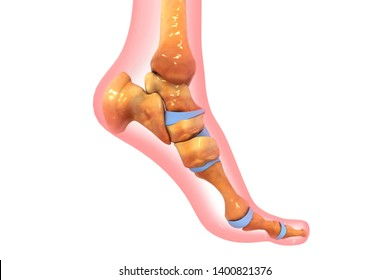 Human foot ankle and leg 3d render