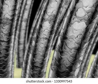Human hair microscope, 3D illustration