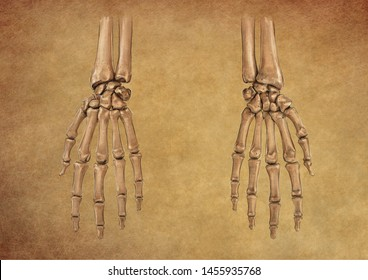 HUMAN HAND BONES COLOUR PENCIL DRAWING ON BROWN BACKGROUND