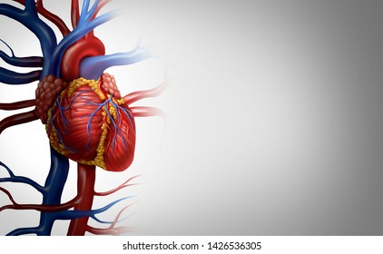 Human heart anatomy from a healthy body isolated on white background as a medical health care symbol of an inner cardiovascular organ in a 3D illustration style.