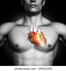 Human heart anatomy illustration of a black and white male on a black background. Part of a medical series