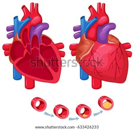 Human Heart Anatomy Medical Science Vector Stock Illustration ...