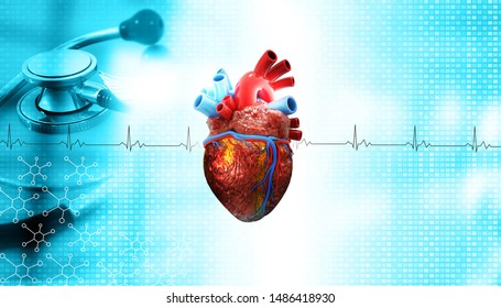 Human heart anatomy on medical background. heart with stethoscope. 3d illustration