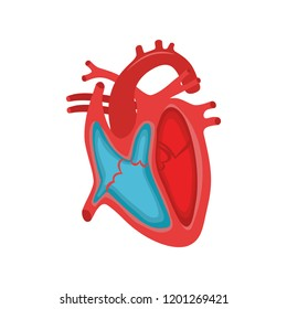 Human Heart Anatomy. Part of the human heart. Anatomy. Diastole and systole.Filling and pumping of Human Heart structure anatomy anatomical diagram. bitmap