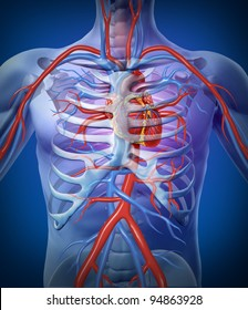 Human heart circulation In a skeleton cardiovascular system as an anatomy for a healthy body on a black glowing background as a medical health care symbol as a medical diagram.