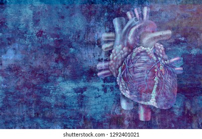 Human heart concept anatomy on a grunge background as a medical health care symbol  or cardiology icon of an inner cardiovascular organ in a 3D illustration style.