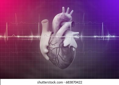 Human heart and ECG 3d illustration
