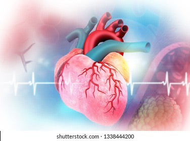 human heart ekg ecg graph 260nw 1338444200
