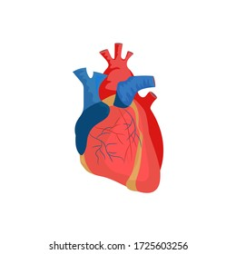 Human heart illustration. Red, blood, organ. Medicine concept. illustration can be used for hospital, laboratory, medical colleges and universities, anatomy studying